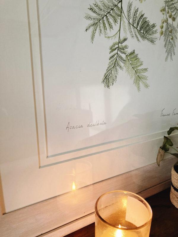 watercolour acacia dealbata painting British artist Frances Farrer